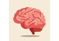 Мозковий кровообіг, причини порушень, профілактика